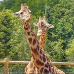 Visite du Zoo de La Bourbansais